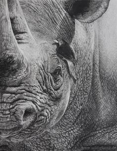 Diana Hoehlig (pencil drawing)