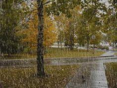 Paisajes de lluvia 66 29 enero 2017