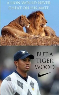 Lions Are Such Loyal Animals Until They Eat Your Face Off As For Tiger Woods Hes A Different Kind Of Animal A Hilarious Picture Of Tiger Woods