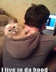 Funny pictures about Just chilling in the hood. Oh, and cool pics about Just chilling in the hood. Also, Just chilling in the hood photos. I Love Cats, Crazy Cats, Cute Cats, Funny Kitties, Adorable Kittens, Adorable Animals, Funny Shit, Funny Cute, Funny Stuff