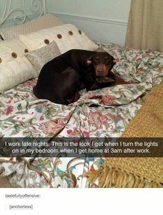 Top Funny dog memes of the day. This is the compilation of top 60 funny dog meme… Top Funny Dog Memes of the Day. This is the compilation of the 60 funniest dog memes that will make you laugh for hours. Do not forget to share. Funny Dog Memes, Funny Animal Memes, Funny Animal Pictures, Cute Funny Animals, Cute Baby Animals, Funny Cute, Funny Dogs, Top Funny, Cat Memes