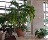 Interior Plant landscaping by  www.interiorplantscapesllc.com with offices in Greenville, Charlotte, Columbia, & Charleston.