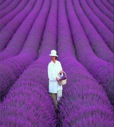Lavender Fields in Provence, France | RAW FOR BEAUTY