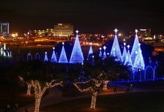 amanda mccoysun heraldthe lights shine in jones park for the very first night of