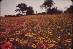 Field of Flowers Still Picture, Field Of Dreams, Pure Happiness, Photo Maps, National Archives, Wild And Free, Nara, Beautiful World, Beautiful Gifts