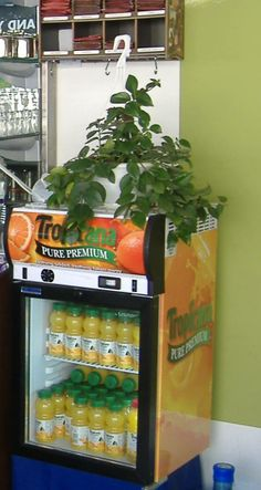 Here's our Tropicana juices display at BR Guest
