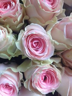 Rose called 'Duchess'.Sold in bunches of 20 stems from the Flowermonger the wholesale floral home delivery service.
