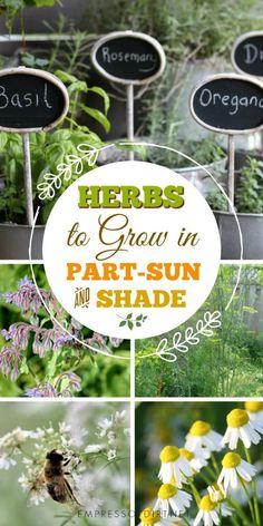 595 Best GARDEN Herbs ✿ Images On Pinterest In 2018   Diy Herb Garden,  Gardens And Healing Herbs