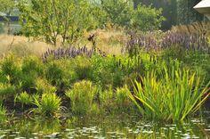 natuurlijke vijver met oever beplanting