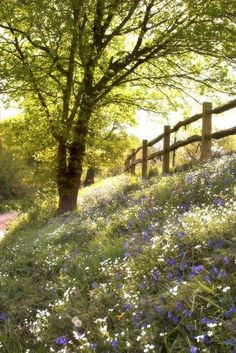 wildflowers along the fence...what a beautiful place for an evening walk