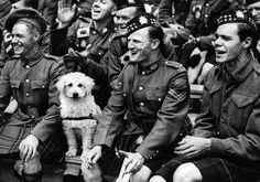 The Bored Dog | The 26 Most Badass Animals From World War II