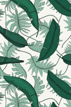 ORINOCO_BANANA_LEAF_JUNGLE by holli_zollinger - Hand illustrated emerald and leaf green monstera and banana leaves on fabric, wallpaper, and gift wrap. Tile Patterns, Fabric Patterns, Flower Patterns, Print Patterns, Fabric Wallpaper, Wall Wallpaper, Banana Pie, Banana Leaves, Jungle Print
