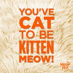 You've cat to be kitten meow!