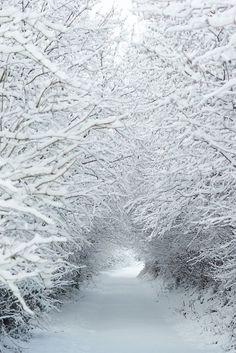 Winter Szenen, Winter Love, Winter Magic, Winter White, Winter Walk, Snow White, Winter Season, Winter Socks, Winter Wonderland