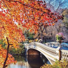Fall at the Bow Bridge in Central Park. Photo courtesy of wildnewyork on Instagram.