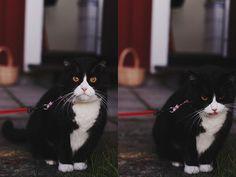 Kitty! | Flickr: partage de photos!