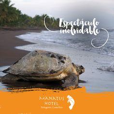 Setiembre es la temporada de desove de tortugas en Tortuguero.¡No esperés más; viví este increíble fenómeno! #Ecoturismo