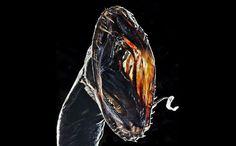 Most Bizarre Deep-Sea Creatures ~~ Black Dragonfish (Idiacanthus atlanticus). This looks like it should be in the ALIEN movie. Deep Sea Creatures, Weird Creatures, Underwater Creatures, Underwater World, Deep Blue Sea, Ocean Deep, Deep Sea Fishing, Water Life, Sea Monsters