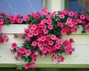 Petúnias As petúnias são consideradas plantas perfeitas para floreiras, e prosperam bem em qualquer solo bem adubado com rega quando necessário, mas com pequenas doses de água por dia apenas. Também são extremamente tolerantes ao calor.