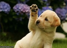 Puppy high five