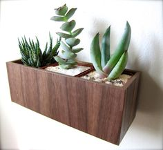 "Wall Hanging Planter (8""), Plant Holder for Succulents, Cacti or Air Plants in WALNUT wood, roughly 8""x3""x3"", air plants sold separately on Etsy, $28.00"