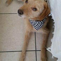 Ο Κυριος Χάρης Σταλίτσας! Το σκυλουνάκι μου! HARRIS! My dog!💁+🐶=life❤❤❤