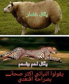 نباتي وحيواني