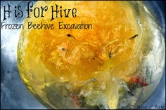 H is for Hive: Frozen Beehive Excavation - House of Burke