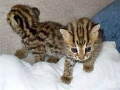 Image result for cute kittens for free adoption