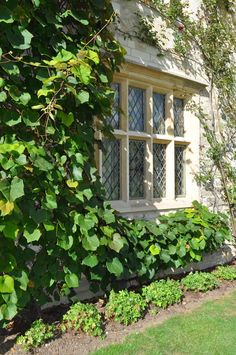 """""""Living Wall"""" room divider. Latticed wall framed by climbing ivy - for privacy wall."""
