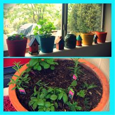 Plant rosemary, mint, lavender and basil in front of entrances to your home/patio/picnic areas in your yard and in your kitchen to ward of bugs! They hate the smell but I sure love it! Gets rid of misquotes, flies, moths, scorpions, spiders and ants! Pass it along to have a critter free summer :) www.facebook.com/ThisToThat