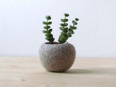 Übertöpfe - Saftige Gründer / gefilzt Schüssel / cactus Vase - ein Designerstück von theyarnkitchen bei DaWanda
