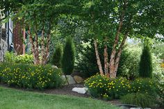Foundation planting of evergreens, deciduous trees and perennials