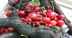 Čerešne sú bezpochyby jedno z najchutnejších ovocí leta. No vedeli ste, že… Home Health Care, Health Advice, Natural Medicine, Health Benefits, Cherry, Remedies, Detox, Health Fitness, Ale