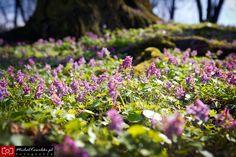 Wiosna w Bolęcinie