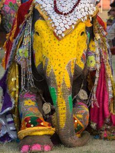 Elephant Festival in Jaipur, Rajasthan, India.