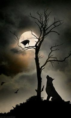 Wolf And Moon Tattoo, Wolf Moon, Wolf Tattoos, Grim Reaper Art, Wolf Silhouette, Raven Art, Wolf Wallpaper, Dark Art Drawings, Wolf Pictures
