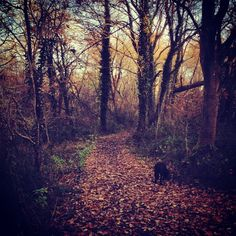 The woodland path as winter takes hold. #path #woodland #forest #leaves #autumn #winter #trees #view #bucolic #country #lovely #peace #lands...