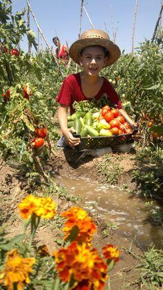 The joy of picking vegetables, good, fresh romanian vegetables!
