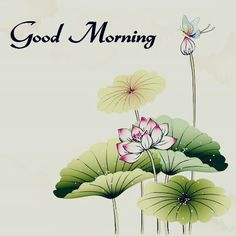 Wednesday Morning Images, Good Morning Friends Images, Funny Good Morning Messages, Good Morning Happy Sunday, Good Morning Image Quotes, Good Morning Cards, Good Morning Beautiful Images, Good Morning Images Download, Good Morning Picture