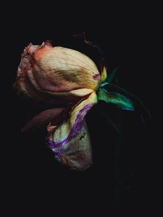 Decaying Flowers — I was shot by Billy Kidd