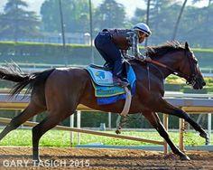 Cozmic One. So gorgeous, all grown up. Horse Love, Pretty Horses, Bob Baffert, Kentucky Horse Park, Triple Crown Winners, American Pharoah, Thoroughbred Horse, Black Horses, Racehorse