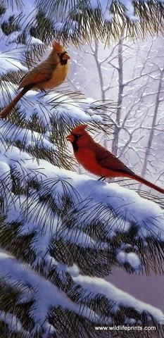 A pair of cardinals provide a brilliant contrast to the winter snow in the Derk Hansen wildlife print Winter's Song. Cardinals do not migrate and do not molt, so they provide that bright cheerful colo