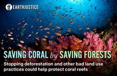 EVERYTHING IS CONNECTED: Researchers have found that improving the way we manage our land, such as stopping deforestation, could be even more important to coral reefs right now than climate change. http://www.treehugger.com/ocean-conservation/how-do-we-save-coral-reefs-stopping-deforestation-land.htmle.  PIN or LIKE if you agree everything is connected!
