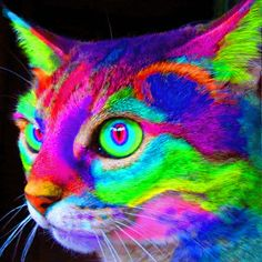 Psychedelic Cat - courtesy of Tommy Chong's Facebook Page. ;)