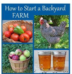How to Start a Backyard Farm - One Acre Farm - good suggestions & info links