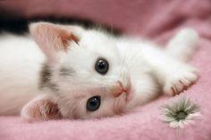 Adorable Cat - 23 Images