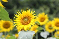 まーずさんが投稿した画像です。他のまーずさんの画像も見てませんか?|おすすめの観葉植物や花の名前、ガーデニング雑貨が見つかる!GreenSnap(グリーンスナップ)