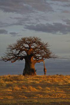 Africa | Morning at Ruaha National park.   Tanzania | © Marjut Raunio