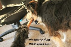 Smiling Dogs Love Windees :http://dogtreatweb.com/smiling-dogs-love-windees/
